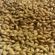 Six Row Grain 1lb